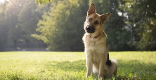 Про утримання та вигул домашніх тварин на території Борівської громади