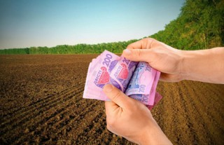 Від чого залежить розмір орендної плати за орендовані земельні паї